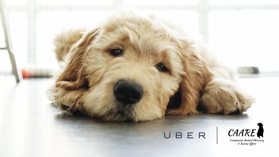 Uber puppies