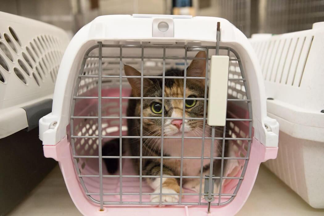 Toronto Cat Rescue